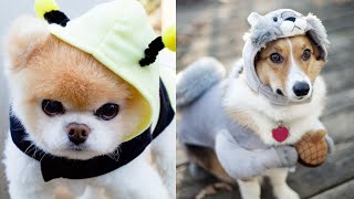 Most Cute Dogs of TIKTOK 2020😍❤ – Funny dogs compilation video😂😂