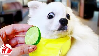Funny Pets Moments 🐶 Cute dogs and puppies doing funny things #40