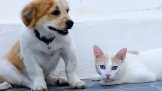 Puppy Is Introduced To Cat And It's The Cutest Thing Ever
