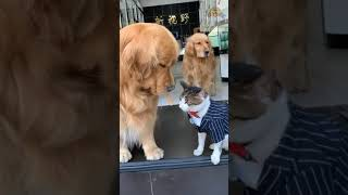 Funny Dogs And Cats||Sana And Silky