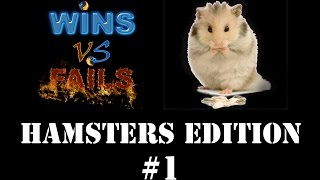 Wins vs Fails – Hamsters Edition [Funny Hamsters Compilation]