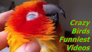 Super Tamed Sun Conure Doing Extreme Ridiculous Funny Thing | Crazy Birds Funniest Videos