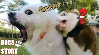 """Try Not To Laugh Pet Dogs"" Funny Dogs And Cats Momment 🐶Dogs Story"