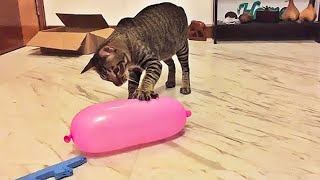OMG So Cute Cats ♥ Best Funny Cat Videos 2020 #31
