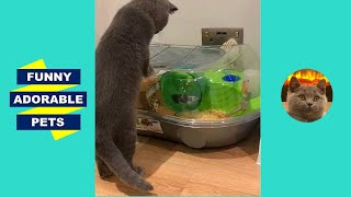 🐱 CATS vs HAMSTERS 🐹 Funny Hamster Videos on Wheels