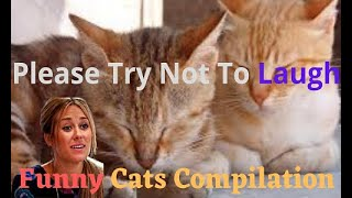 Cute Pets – Cute Cats Doing Funny Things 2020