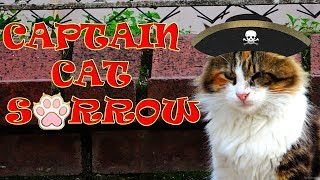 Can Cats Be Pirates of the Caribbean? (Cute Cats – Pirate Cat)