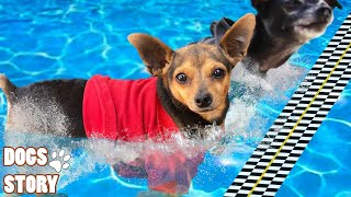 Dogs Swimming Day|Try Not To Laugh Pets Dogs | Funny Dogs Love Swimming🐶Dogs Story