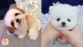 😍 Cute Puppies Doing Funny Things 2020 😍 #9 | Cute VN