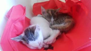 Cute Cats Sleep Together HD