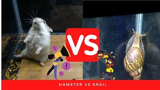 HAMSTER FIGHT | HAMSTER VS SNAIL