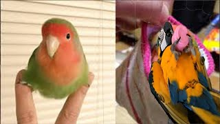 Birds Watching Funny Parrots And Cute Birds Funny Videos Compilation #BirdsParadise5