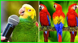 Funny Parrots and Cute Birds Video Compilation Adorable Moments Of the animals #1 – Cutest Parrots