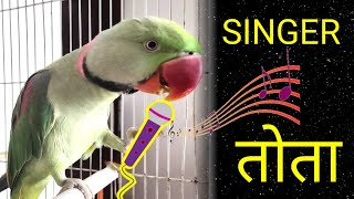 Parrot Singing and Dancing – FUNNY BIRDS COMPLILATION