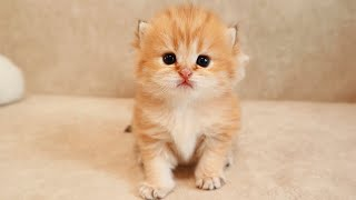Funny kitten hiccups 😍