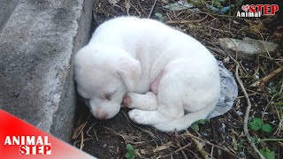 Scared Puppy Rescued from the Wood by Hero Woman