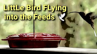Cute Birds and The Beautiful Nature | Birds and Nature Videos Compilation #1 – 2020