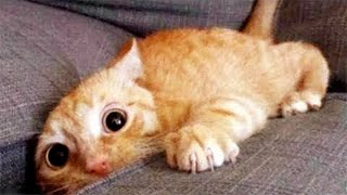 Aww Super Cute ♥ Best Funny Cats and Dogs Compilation #74