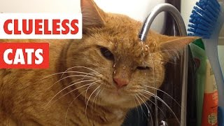 Clueless Cats   Funny Pet Video Compilation 2017   The Pet Collective