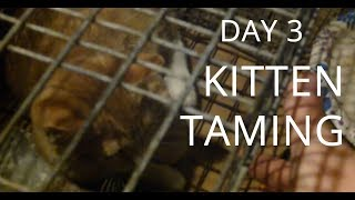 Wild Kitten Eats Out Of My Hand! – Feral Cat Taming – Day #3