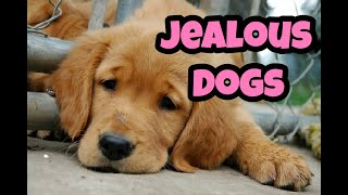 Jealous Dogs Want Attention Compilation (2020)