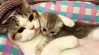 Aww Super Cute ♥ Best Funny Cats and Dogs Compilation #77