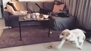Puppy and cat cause playtime havoc in the living room
