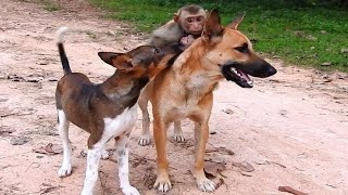 Smart Cute Dogs Carrying Kaka&Lora back To Papa, Little Dog Catching  Baby Lora Out From Lucky..
