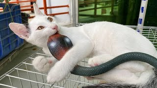 Baby Cats – Cute and Funny Cat Videos Compilation with Dangerous Snake #4 | Super Crazy Animals