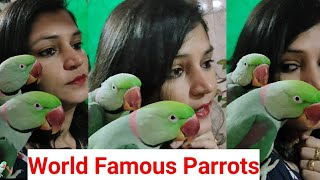 World Famous Talking parrots – Hilarious Talking bird