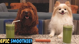 Dogs Make an Epic Smoothie! [Funny and Cute Dogs Make a Huge Mess While Cooking]