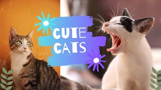 Baby Cats – Cute and Funny Cat Videos Compilation | Funny cute cats😂