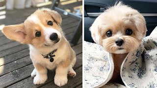 Cute Puppies Doing Funny Things, Cutest Puppies in the Worlds 2020 ♥   Cutest Dogs