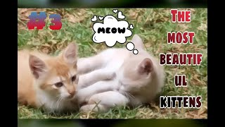 Cute cats like to playing🐈 funny kittens star😍 cats super star