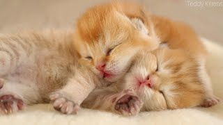 😻 Sleepy two tiny Kittens |  9 days after birth 🍼