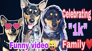 #funny dogs compilation#funniest dog videos #Celebrating 1k family💖 #desi paws#