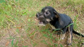 Puppy want food | without mother | this video will make you cry … Dog rescue story