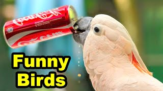 Funny Parrot Compilation Video | Exotic birds | Central Florida Parrot Rescue & Parrot Sanctuary