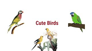 Cute Birds Compilation