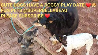 CUTE DOGS BELLA AND BEAU HAVE A DOGGY PLAYDATE!❤🐶