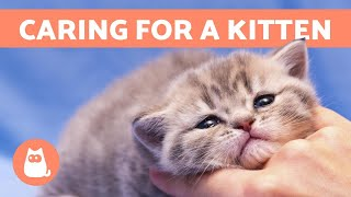 How to CARE for a KITTEN – Food, Education and Health