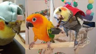 *New* Backyard Bird Watching  Cute Birds|Parrot Doing Funny Things Talking Singing Dancing 35 Part 2