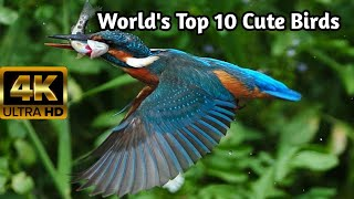 TOP TEN CUTE BIRDS ON THE EARTH