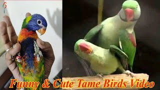 Funny & Cute Tame Birds Video Compilation – Naughty Pet Birds Hilarious Video