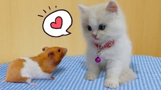 🐹😺 CAT KITTEN And HAMSTER 🐹 [OBSTACLE COURSE] Funny Cat Complilation by Life Of Pets Hamham