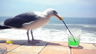 Funny Birds Stealing Stuff Compilation