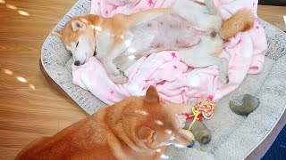 9 Minutes of Puppy Movements in Mom's tummy!