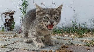 Little Cute orphan Kitten is running after another mother cat because she is not a mother.😥