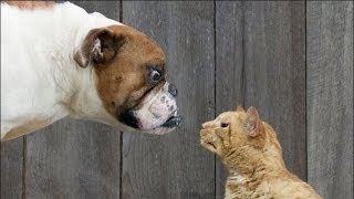 Funny Cats and Dogs Fighting for Household Control