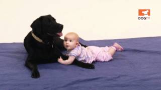 Pink Baby Playing With Black Dog – So Cute! [DogTV]